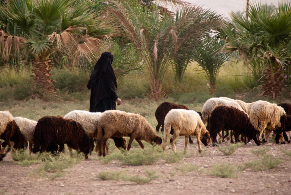 Egypt 3500