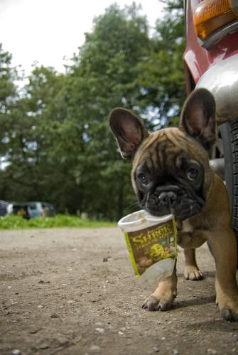 Luuk // French Bulldog