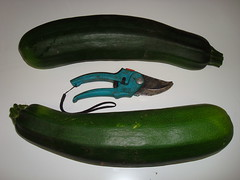 Grosse courgettes