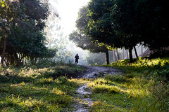 Village life, Vanuatu (elyse patten) Tags: morning trees shadow people man male men green nature silhouette rural canon track village pacific path scenic tribal jungle santo pathway indigenous vanuatu indigenouspeople pacificislands espiritusanto minoritypeople melanesian elysepatten