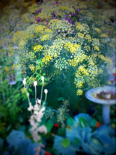 Do you think we'll have any fennel this year?