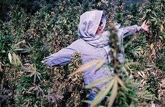h l y s h t (Spavalice) Tags: afghanistan me field pot marijuana cannabis