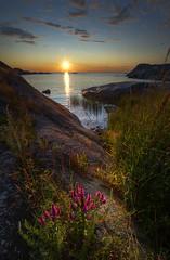 Sunset (jonasfj) Tags: sunset sea flower beach water beautiful grass landscape nikon sailing balticsea hdr archipelago afs1735mmf28 storanassa d700