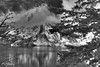Dream On (P. Oglesby) Tags: blackandwhite snow mountains landscapes grandtetonnp jennylake thehighlander godlovesyou coth cathedralgroup theunforgettablepictures yourwonderland coth5 mygearandmepremium mygearandmebronze mygearandmesilver inspiredbyansel