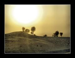 Sublime Sunset (++ i ++) Tags: trees sunset wallpaper sun beautiful al sand dubai desert dune uae palm oasis rub khali