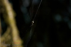 MiniBreak- North Cascades 59 (djwudi) Tags: summer vacation usa spider washington nikon day afternoon d70s quantaray northcascadesnationalpark minibreak sigma55200mmf456dc colonialcreekcampground rosslakenationalrecreationarea quantaray55200mmf456qd