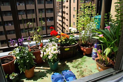 My garden June 15, 2010