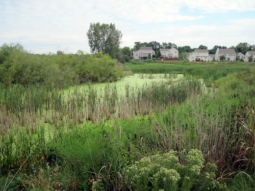 Wetlands at Jones Meadow Park 20100817