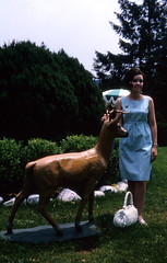 Mom and a statue of a deer at Mt. Airy Lodge (epicharmus) Tags: vacation woman tree green statue lady garden mom hotel pennsylvania mother spouse slide 1966 lodge resort deer antlers purse wife poconos greenery kodachrome buck crocheted bushes sundress pocketbook crossedlegs 35mmslide monroecounty mountpocono mtpocono thepoconos daddino oropallo marieoropallo mariedaddino mariadaddino mariaoropallo mountairylodge mtairylodge mountairycasinoresort processedjuly1966