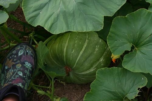 Pumpkin4_2010