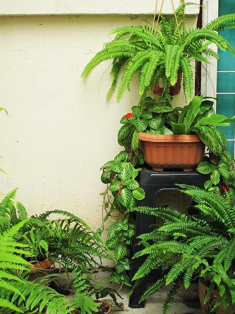 IMG_1559 The Secret Garden ,秘密花园