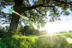 I want to get in the sun (gregor H) Tags: morning summer sun tree nature field backlight clouds sunrise bench landscape dawn austria early feldkirch spirit pasture rays wakeup range alp sunbeams greengrass newday beautifulday vorarlberg schellenberg thesecretlifeoftrees oberfresch