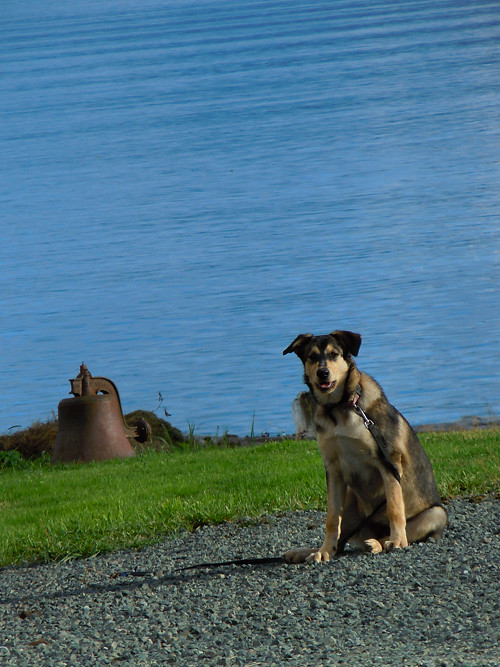 local dog and bell, Kasaan, Alaska