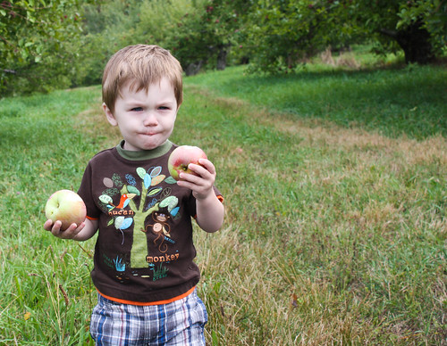 applepicking10-2
