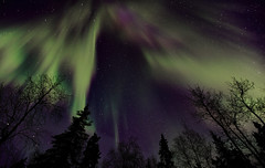 Northern Lights (Wolfhorn) Tags: trees winter cold nature alaska stars northernlights auroraborealis