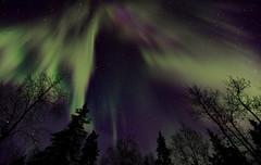Northern Lights (Wolfhorn) Tags: trees winter cold nature alaska stars northernlights auroraborealis