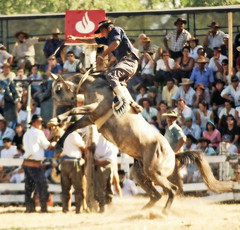 Equilibrandose (Eduardo Amorim) Tags: horses horse southamerica caballo uruguay cheval caballos cavalos pferde cavalli cavallo cavalo gauchos pferd pampa hest hevonen chevaux gauch