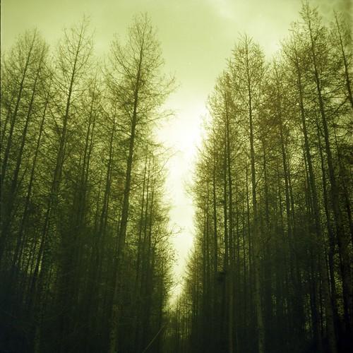 フリー写真素材, 自然・風景, 森林, 樹木,