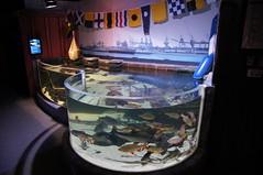 SEA Live (Magdeburg) Tags: sea fish berlin germany aquarium fisch berlinmitte sealive aquadom berlin2011a sealivecentre