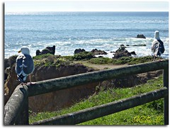 Coastal Views! P1020809 (medaibl) Tags: ocean california water birds rocks waves pacific centralcoast medhathi coastalanwaterviewsbymi