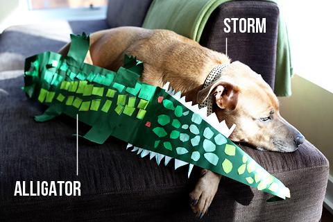 alligatorbyc-0211