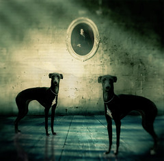 Interior Fidelity (Sirio Timossi) Tags: wood old blue light shadow dog black art texture illustration square mom death artist dof sad bokeh decay pastel interior picture whippet canvas frame whip collar clever imperfection fidelity sirio levrier thelittledoglaughed timossi