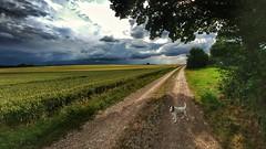 walking the dog (Oliver Kuehne) Tags: weather lgg5 bavaria germany penzing landsberg android cellphone dog hund chien anton jrt jackrussellterrier