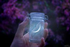 Eternal Moonlight ☾ (Felicia Brenning) Tags: eternal moonlight moon light crescent luna bottle captured flowers pink purple colors colours colorful colour color magic magical fantasy night outdoors outside outdoor nature hand art artsy photoart photographyart fantasyphotography photoshop photomanipulation photography photooftheday surrealphotography surreal surrealism creativephotography creative fairytalephotography fairytale fairy tale jar crescentmoon imagination imaginative dream dreamy myworld fiction inspiration scandinavia sweden sony sonyslta57 sonyalpha