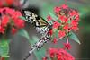 Butterfly (Bri_J) Tags: tropicalbutterflyhouse northanston sheffield southyorkshire uk yorkshire nikon d7200 butterfly