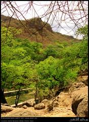Tamarind Forest Hashir Mountain, Mirbat, Dhofar (Shanfari.net) Tags: mountain nature lumix raw natural panasonic fabaceae oman fz  ayn jebel jabal ain jebal zufar rw2 indica salalah hashir sultanate dhofar  tamarindus  khareef    mirbat     tamarindusindica dufar aqabat       dhufar governorate  aqbat dofar fz38 marbat  fz35 dmcfz35