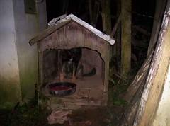 Mais cães abandonados no Jardim