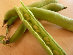 Broad beans in their pod
