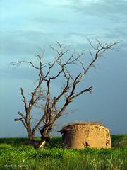 (Esmaeel Bagherian) Tags: tree nature iran  sx1    iranmap canonsx1is iranmapcom