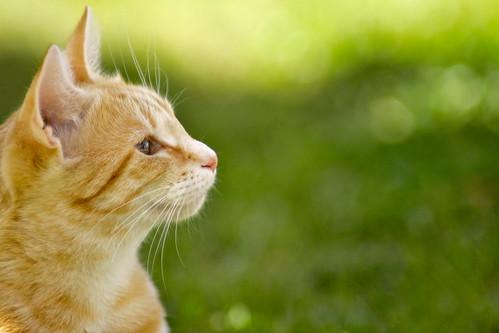 [フリー画像] 動物, 哺乳類, ネコ科, 猫・ネコ, 201011031100