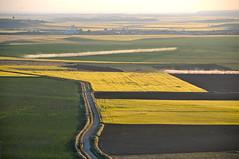 CAMPOS  DE CEREALES (marthinotf) Tags: de cereales campos castilla cultivo