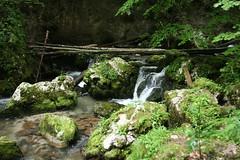 2010_Bihar_0258 (emzepe) Tags: county mountain mountains water creek river stream hiking fast canyon bach trail romania gorge transylvania transilvania 2010 kirnduls bihar cheile patak erdly valea nyr nyri ardeal siebenbrgen judetul bihor tra hegyek bihari rumanien krt vz hegysg galbena szurdok szoros tvonal hegyi megye romnia transylvanien trzs szombat judet vlgy galbenei galbina kkz szigethegysg vzfolys ttrs karszthegysg folycska srgakrs