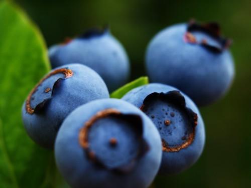 Blueberries in our Garden