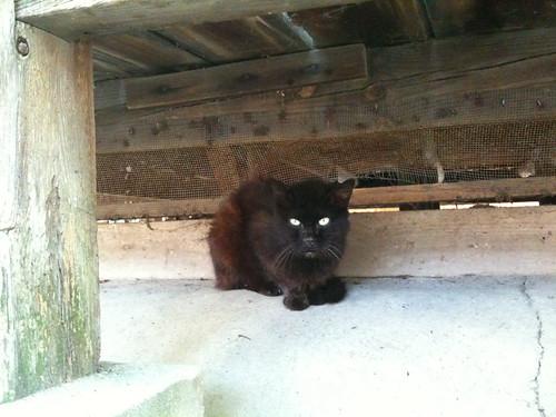 Today's Cat@2010-07-05