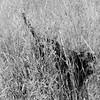 -- (tartalom) Tags: july hay thedog newross thelittledoglaughed tartalom christophersweeney