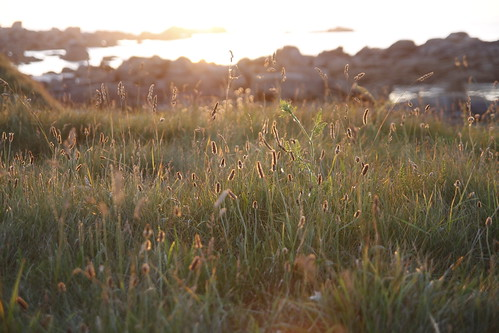 Malick-style shot in Brignogan