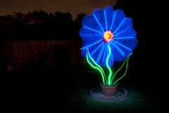 Forget me..... NOT!!! (TxPilot) Tags: light lightpainting flower painting nikon paint led lap d200 lightart lightpaint lightartphotography