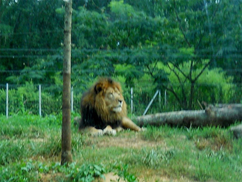 Zoo2010_015