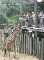 Brevard Summer Program visits the zoo