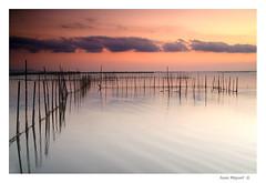Escenas de la Albufera (Juan Miguel) Tags: sunset espaa lake water valencia lago atardecer spain agua europa europe 7d dynax spanien albufera konicaminolta spagne