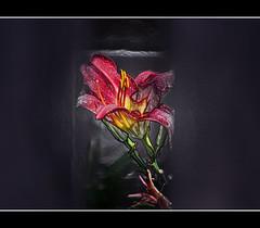 Embossed (mariosworld343) Tags: summer flower nikon vibrant framed wrap plastic 70300mm vr embossed blooming d90 greatphotographers
