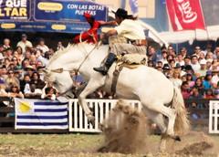 Peleando, todava... (Eduardo Amorim) Tags: horses horse southamerica caballo uruguay cheval caballos cavalos prado montevideo pferde cavalli cavallo cavalo gauchos pferd hest hevonen chevaux gaucho  amricadosul montevidu hst uruguai gacho  amriquedusud  gachos  sudamrica suramrica amricadelsur  sdamerika jineteada   americadelsud gineteada  americameridionale semanacriolla semanacriolladelprado eduardoamorim iayayam yamaiay semanacriolladelprado2010