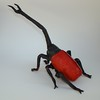 Giraffe Weevil (male)