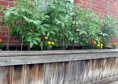 July 11 Garden(2)