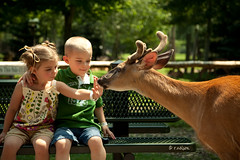 M., C. & The Deer (Rebecca812) Tags: vacation portrait sunlight tree cute beautiful animal wisconsin kids bench children outside kid twins ribbons child hand sister brother daughter son deer antlers sniff pigtails fraternal canon5dmarkii familygetty2010
