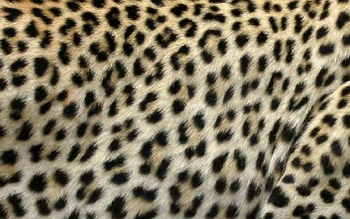 Piel De Leopardo. piel de leopardo